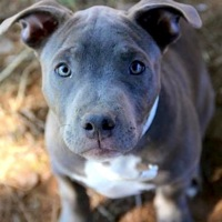 Donate To Pit Bull Rescue ― Donations